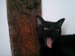 Shmouky, chat