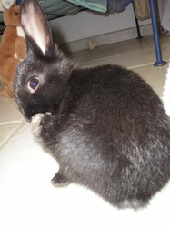 Shouky, rongeur Lapin