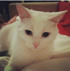 Shoushoune, chat Gouttière