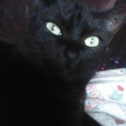 Shunga, chat Gouttière