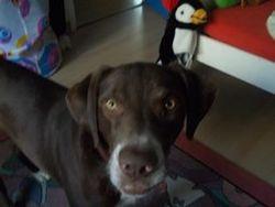 Shyvann, chien