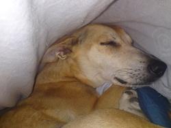 Sid Dead, chien