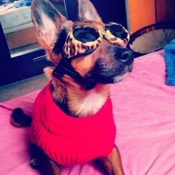 Sidney, chien