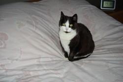 Sidonie, chat