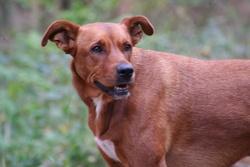 Siena, chien