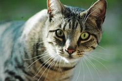 Siera, chat