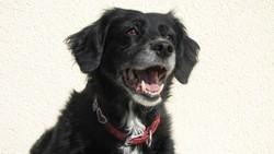 Sierra, chien