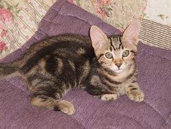 Décibel, chat Gouttière