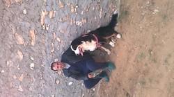 Simba, chien