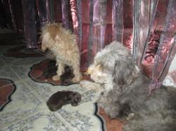 Simba Et Rosa, chien
