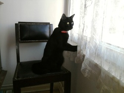 Sirius, chat