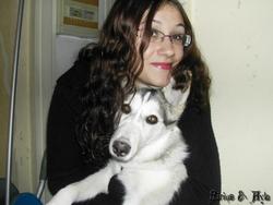 Sirius, chien Husky sibérien