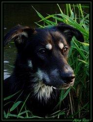 Siska, chien