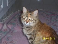 Sissi, chat Européen