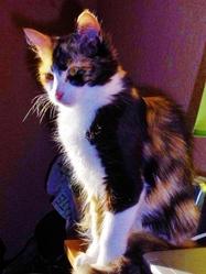 Sissy Serafina, chat