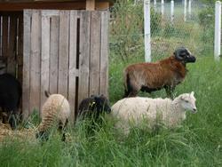 Six Moutons, autres