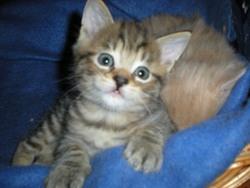 Skippy, chat Gouttière
