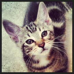 Skrapy, chat Gouttière