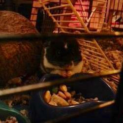 Slinky, rongeur Hamster