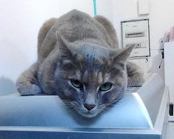 Slouby, chat Gouttière