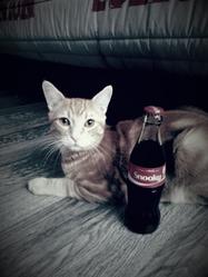 Snooky, chat Gouttière