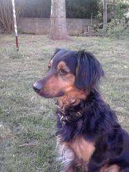 Snoop, chien