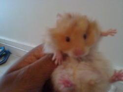 Snoop Dogg, rongeur Hamster