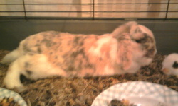 Snoopy, rongeur Lapin