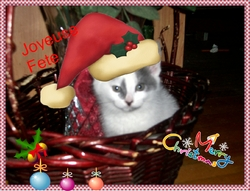 Snow Bell, chat