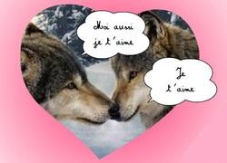 Snow Wolf, autres