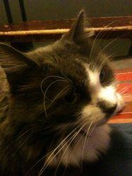 Socrate, chat Gouttière