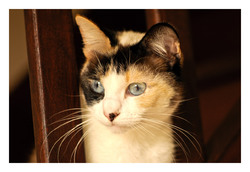 Soja, chat Gouttière