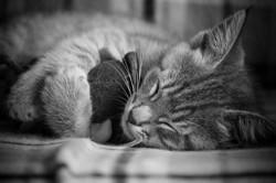 Sokette, chat Gouttière