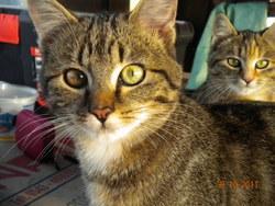 Soleil, chat Gouttière
