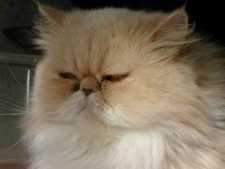Solène, chat