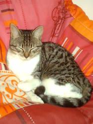 Sonie, chat Gouttière