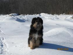 Sonny, chien