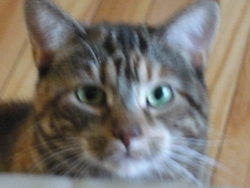 Sophie , chat Gouttière