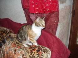 Sophie, chat