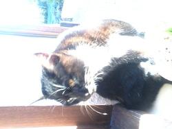Soquette, chat Gouttière