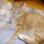 Sorana à Adopter, chat