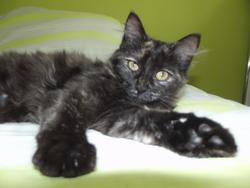 Souris, chat Gouttière