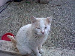 Soushi, chat