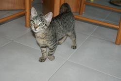 Sparrow, chat Gouttière