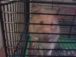 Speed, rongeur Hamster