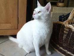 Speedy, chat Gouttière