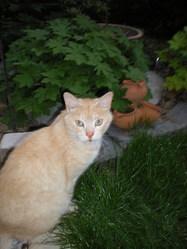Spidy, chat Gouttière