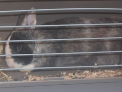 Spike, rongeur Lapin