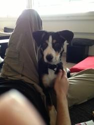 Spike, chien Border Collie