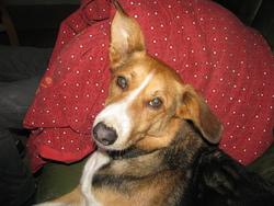 Spike, chien